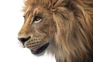 Lion animal wild, close view
