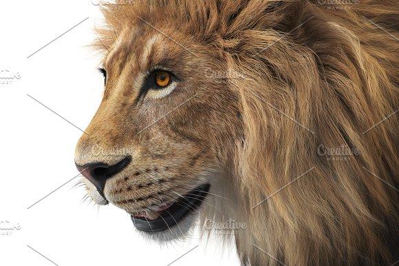 Lion Animal Wild Close View