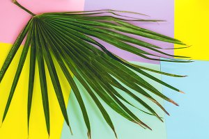 palm leaf. minimalism. flora. exotic