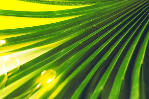 texture and background. palm leaf. t
