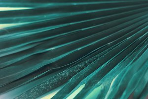 palm leaf. Blue colour. background a