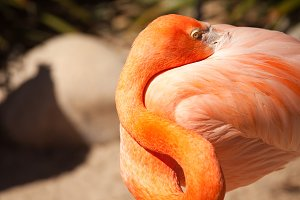 Beautiful Flamingo In The Warm Sun