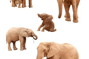 Set of Baby and Adult Elephants
