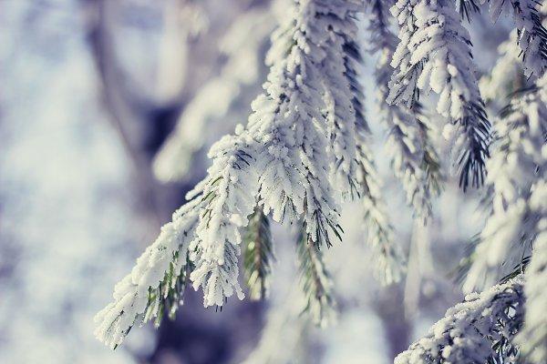 Winter snow enveloped.