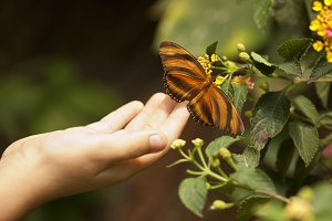 Child Hand Touches a Butterfly