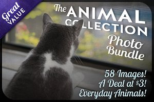 The Animal Collection Photo Bundle