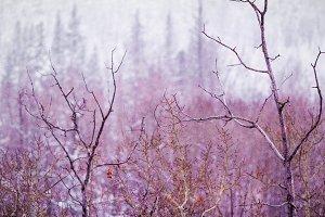 Mystical Purple Winter Forest