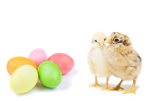 Easter chick and painted eggs