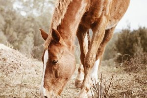 Beautiful horse grazing