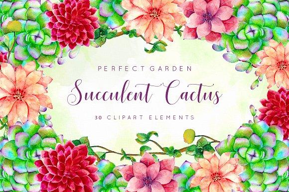 Floral Cactus Succulent Collection