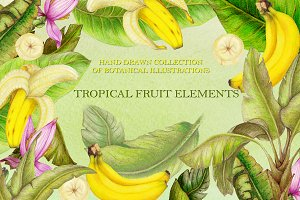 Tropical illustrations bundle