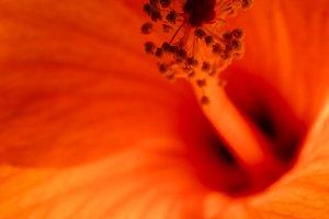 Close up orange flower