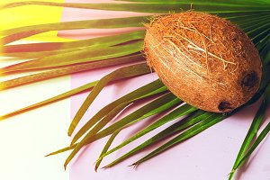 coconut. palm leaf. food. fruit. coc
