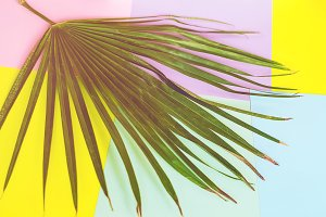 palm leaf. exotic and tropical. back