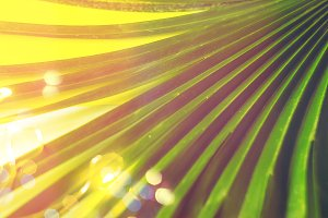 texture and background. palm leaf. g