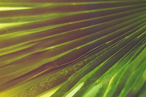 palm. sheet. background and texture.
