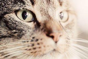 Cute cat close-up portrait