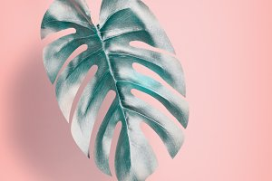 Tropical leaf at pastel pink