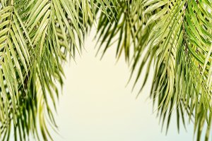 Tropical hanging palm leaves