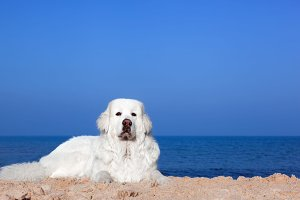 Cute white dog on the beach