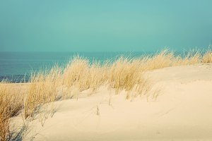Calm sunny beach with dunes and gras