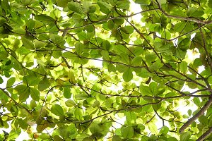 Green fresh leaves on a forest