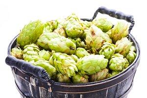 The fresh green hop cones
