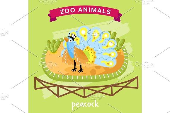 Vector Zoo Animal Peacock