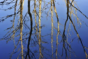 trees reflected in the river