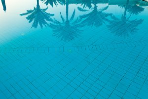 Coconut palm tree reflection