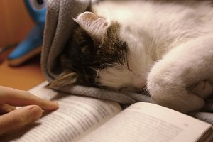 Cute cat sleeping beside the book lazy nap