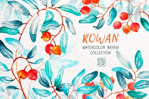 Rowan - watercolor berry collection