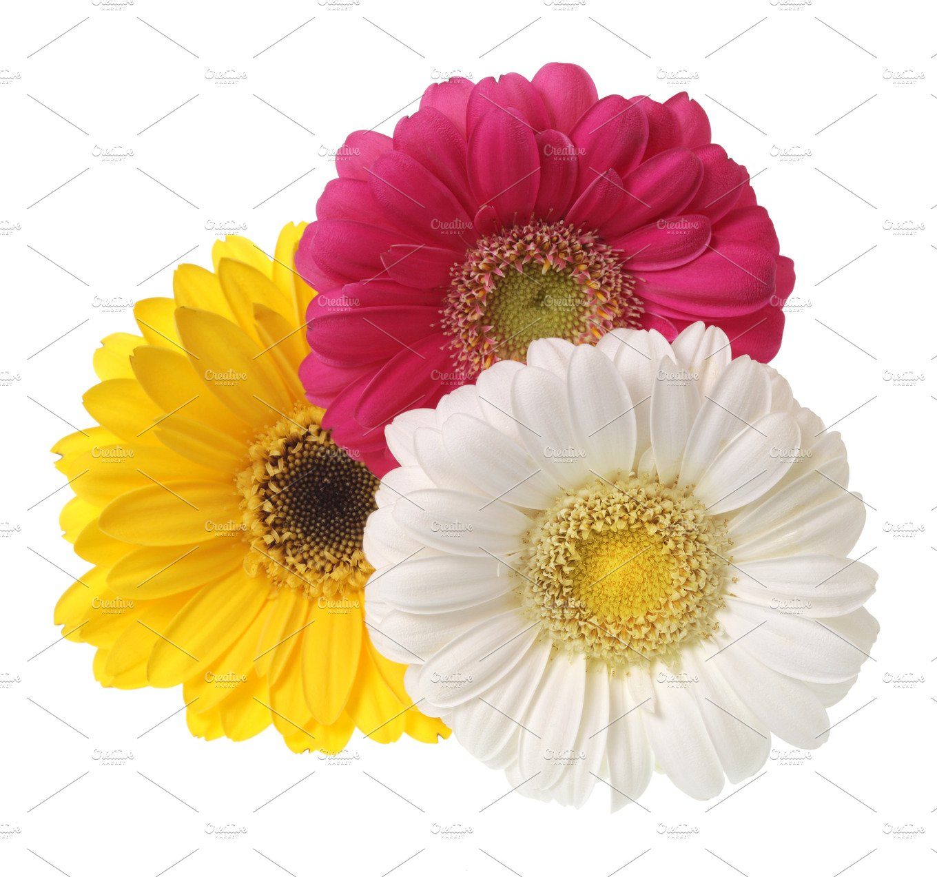 Gerbera flowers isolated on white nature photos creative market mightylinksfo