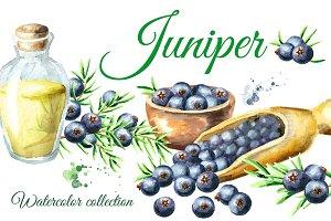 Juniper. Watercolor collection