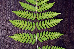 Fern leaf on dark oak plank