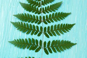 Turquoise oil painted board and fern