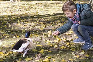 Handsome boy feeding a duck