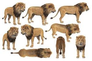 Lion african set