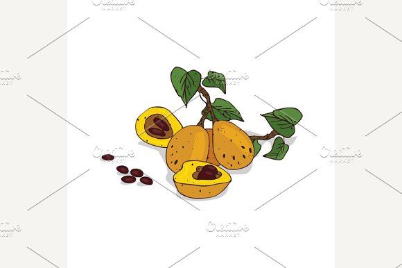 Isolated Clipart Marula
