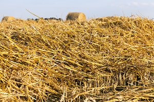 stacks of golden straw