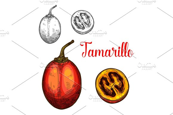 Tamarillo Vector Sketch Fruit Cut Icon