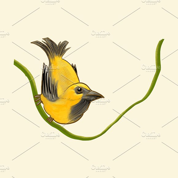 Hand Drawn Golden Finch Isolated