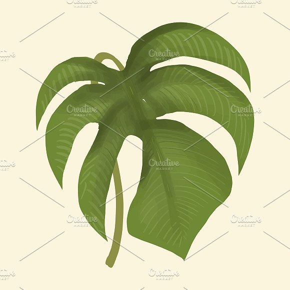 Hand Drawn Plant Leaf Isolated