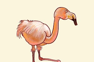 Hand drawn flamingo isolated