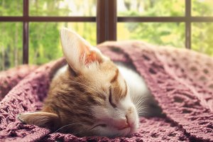 Kitten sleeping in front of a Sunny window. Portrait of a cat