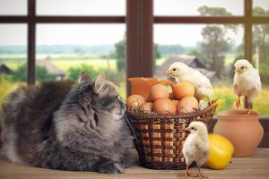 Funny Easter still life with a cat, chickens and eggs