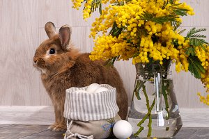 Easter still life with rabbit, eggs and Mimosa