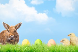 Easter eggs, chickens and rabbit. Sky, grass