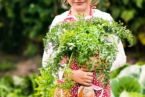 A small girl harvesting vegetables on allotment, holding a big carrot.