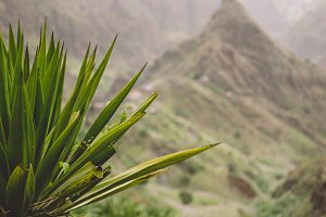 Agave plants in front of lombo de pico rock in Xo-xo valley. Trekking path number 202 over Rabo Curto to Ribeira da torre. Santo Antao island, Cape Verde